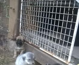 Собачки ищут заботливых хозяев - фото 1 к объявлению