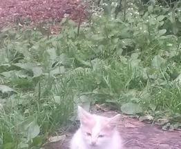 Котенок ищет заботливых хозяев - фотография  к объявлению