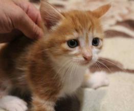 Отдам котят - фото 1 к объявлению