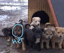 Собака ищет заботливых хозяев - фотография  к объявлению