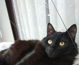 Отдам кота Филю в хорошие руки (возраст 9 мес.) - фото 1 к объявлению