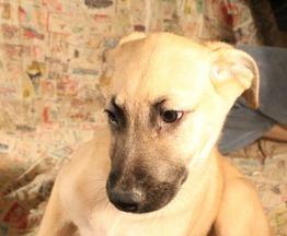 Солнечный щен Реджинальд ищет заботливых хозяев - фото 1 к объявлению