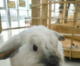 Кролики ищут дом! - фото 1 к объявлению