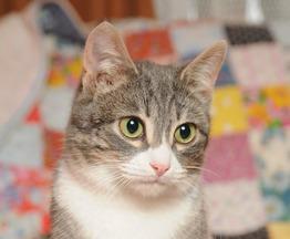 Ищет любящих хозяев кот Федор - фото 1 к объявлению