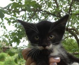 Котик Сомик ждет хозяев - фото 1 к объявлению