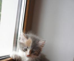 Котята домашние - фото 1 к объявлению
