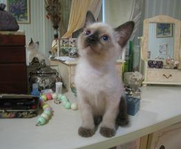 Котята тайские (старосиамские) - фото 1 к объявлению