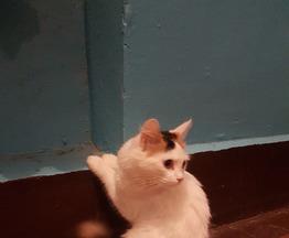 Заберите молодую кошечку в теплый дом! - фото 1 к объявлению