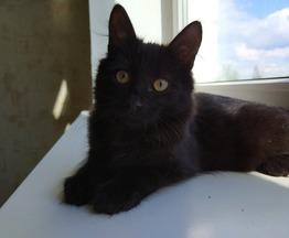 Отдам кота Филю в хорошие руки - фото 1 к объявлению
