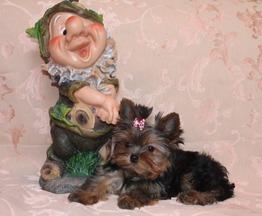 Мини Йорочка девочка крошка на ладошку - фото 1 к объявлению