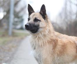 Чудесный пес Родик ищет дом. - фото 1 к объявлению