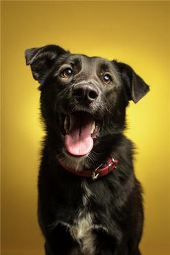 Молодая собака Даша ищет дом. - фото 1 к объявлению