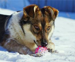 Чудесный щенок Жужа ищет дом!!! - фото 1 к объявлению