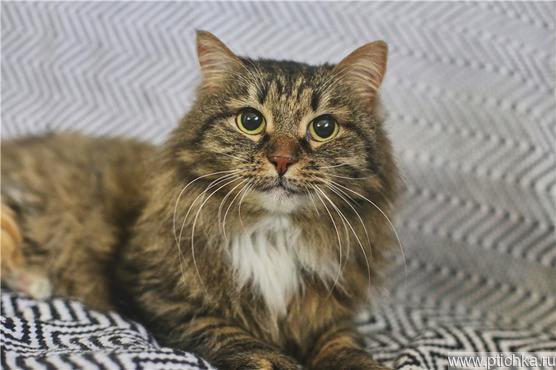 Очаровательная кошечка Марфуша ищет дом. - фото 1 к объявлению