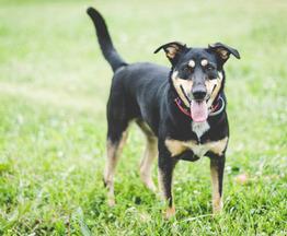 Добрая собака Жуня в добрые руки. - фото 1 к объявлению