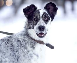 Чудесная собака Белла в добрые руки. - фото 1 к объявлению