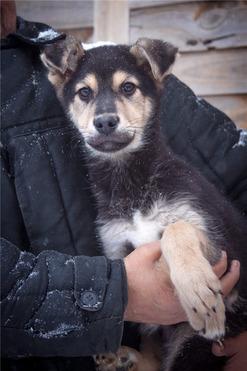 Очаровательный щенок Валет ищет дом. - фото 1 к объявлению