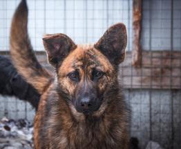 Красивый щенок-подросток ищет дом! - фото 1 к объявлению