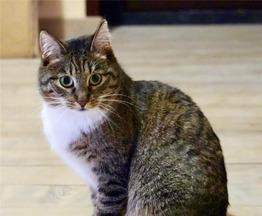 Кошечка Рыся ищет дом и любящее сердце. - фото 1 к объявлению