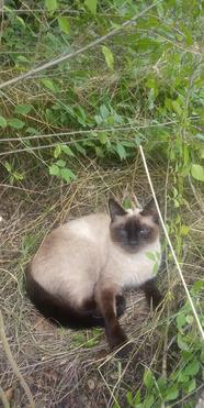 Молодая кошечка ищет дом - фото 1 к объявлению