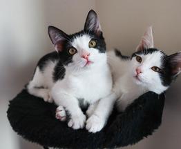 Котята в добрые руки - фото 1 к объявлению