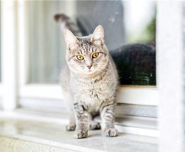 Очаровательная кошечка Туся ищет дом. - фото 1 к объявлению