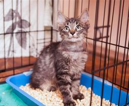 Ищут дом два милых котёнка Иржик и Перчик. - фото 1 к объявлению