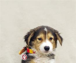 Самые милый щенок Тамир в добрые руки! - фото 1 к объявлению