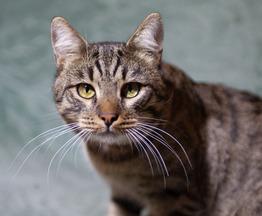 Ищет дом молодой котик Моисей. - фото 1 к объявлению