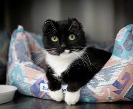 Очаровательная кошечка Ушко с нетерпением ждёт своего хозяина! - фото 1 к объявлению