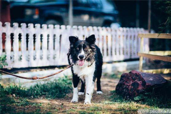 Красивая собака Рокси в добрые руки. - фото 1 к объявлению