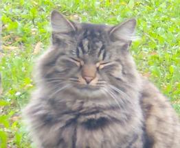 Найдена кошка - фото 1 к объявлению