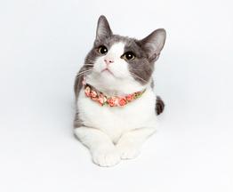 Кошка Бася ищет заботливых хозяев - фото 1 к объявлению