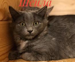 Чудесные котята ищут дом - фото 1 к объявлению
