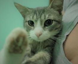 кот ищет заботливых хозяев - фотография  к объявлению