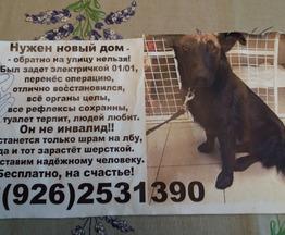 Потерялась собака - фотография  к объявлению