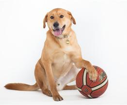 Молодой пес Бун ищет дом!!! - фото 1 к объявлению