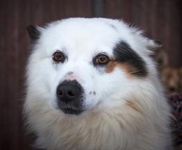Молодой пес Бублик ищет дом. - фото 1 к объявлению