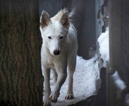 Очаровательная собачка Сима в добрые руки. - фото 1 к объявлению