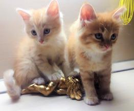 Котята в дар - фотография  к объявлению
