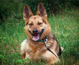 Пёс Бруно в добрые руки. - фото 1 к объявлению
