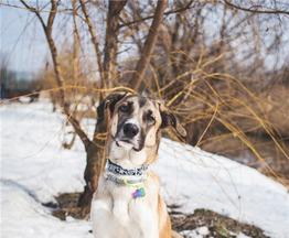 Красивый пёс Пилигрим в добрые руки. - фото 1 к объявлению