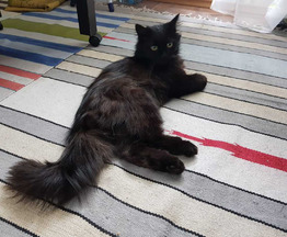 Найден кот - фотография  к объявлению