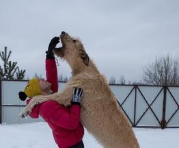 Продается ирландский волкодав - фото 1 к объявлению