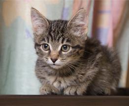 Очаровательные котята-мальчики ищут дом! - фото 1 к объявлению