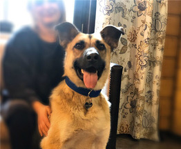 Ищет дом замечательный пёс Грей. - фото 1 к объявлению