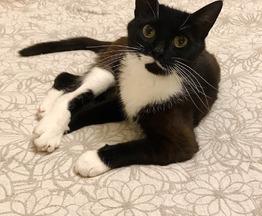 Кошка Лада  ищет заботливых хозяев - фотография  к объявлению