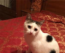 Чудесная кошка Муся в добрые руки. - фото 1 к объявлению