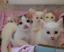 Четыре пушистых котёнка 2,5 мес. в добрые руки. - фото 1 к объявлению