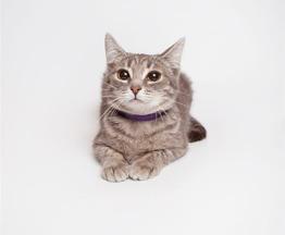 Трогательная и милая  кошечка Умка ждёт своего человека! - фото 1 к объявлению